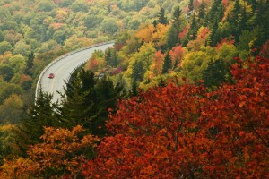 Top drives to take this autumn