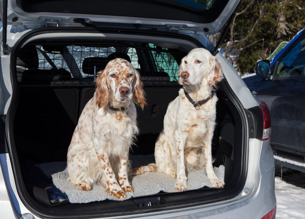 The Best Cars For Dogs Aa