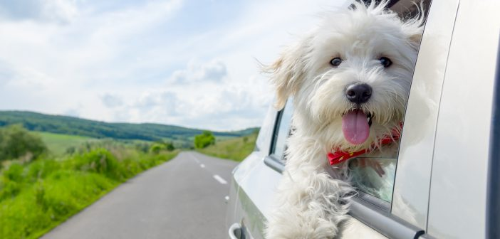 The best cars for dog owners