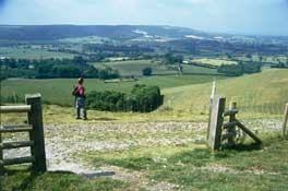 Dorset_Walks23.jpg