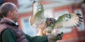 Lainston House Hotel falconry experience
