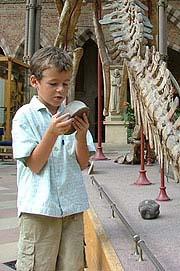 A boy exploring Oxford Museum of Natural History