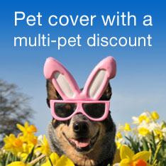 Pet cover with a multi-pet discount